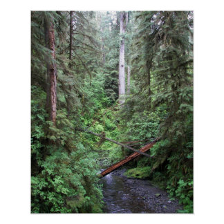 Forest Stream Nature Poster