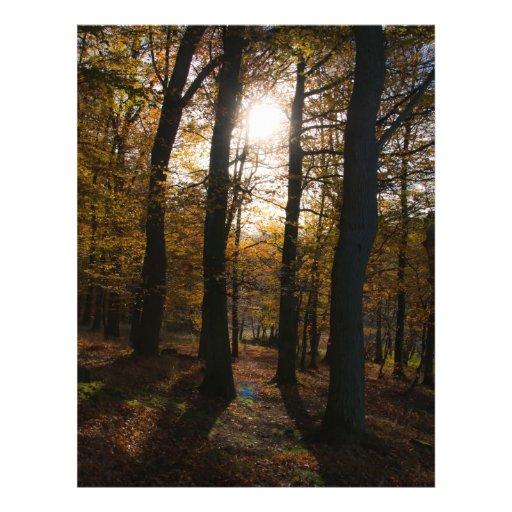 Forest sun flyer