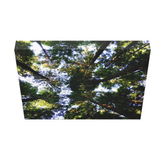 Forest Themed, View Of Treetops From Floor Of Fore Gallery Wrapped Canvas