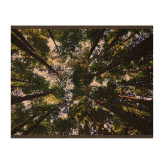 Forest Themed, View Of Treetops From Floor Of Fore Cork Paper Print