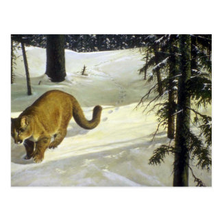 Forest trail, Cougar Postcard