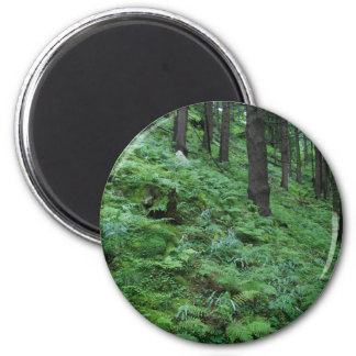 Forest trail in Bad Gastein 6 Cm Round Magnet