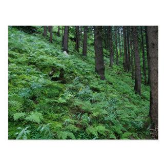 Forest trail in Bad Gastein Postcard