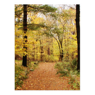 Forest Trail Path Post Cards