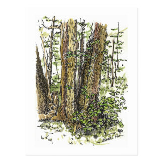 Forest Trail Postcards