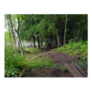 Forest Trail Through Jay Cooke Park Post Card