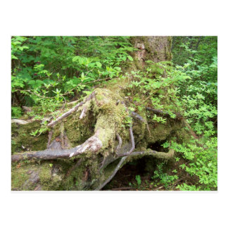 Forest Tree Growth Postcard