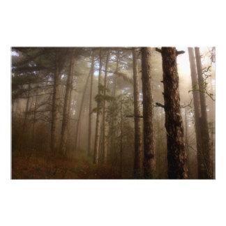 Forest Trees Natural Landscape Full Color Flyer