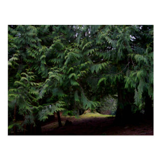 Forest Walk Postcard