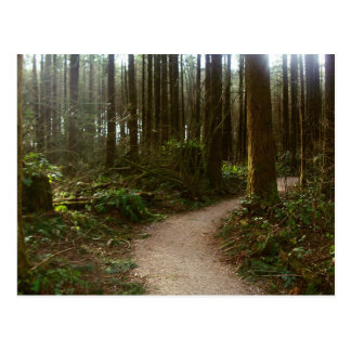 Forest Walk Postcard