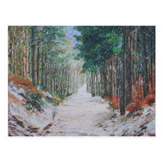 Forest walk, Yorkshire, England. Post Cards