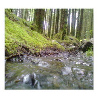 Forest & Water Photo Print