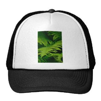 Forests & Jungles Cap