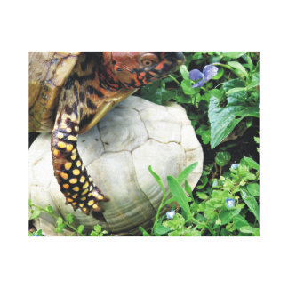 Forever Friends Box Turtle & Shell Canvas Print