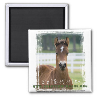ForeverMorgans One Life at a Time Foal Square Magnet