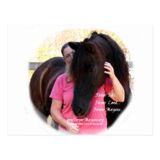 ForeverMorgans Rescue Horse Jack Postcard