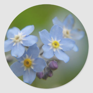 Forget Me Not Blue Myosotis Classic Round Sticker