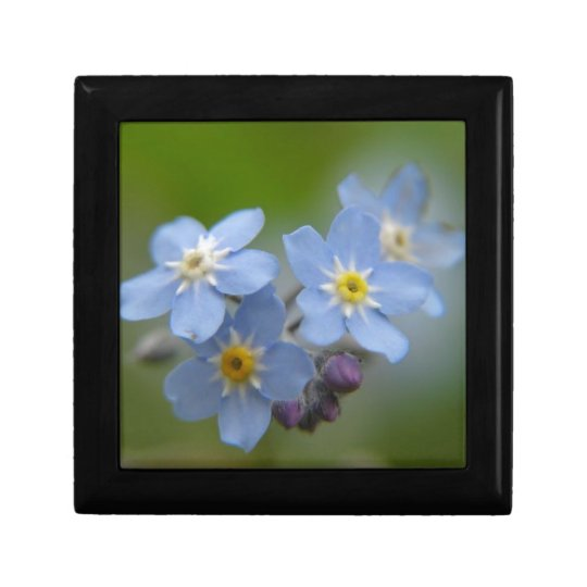 Forget Me Not Blue Myosotis Gift Box