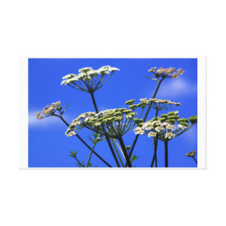Forget me Not Canvas Prints