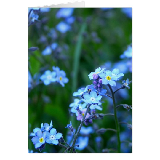 Forget-Me-Not Card