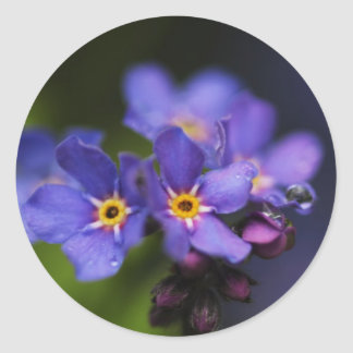 Forget-me-not Classic Round Sticker