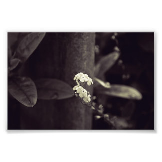 Forget-Me-Not Ever in Black and White Photo Print