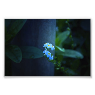 Forget-Me-Not Ever in Evening Art Photo