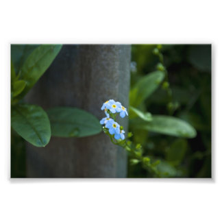Forget-Me-Not Ever Photo Art
