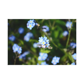 Forget-me-not field canvas print