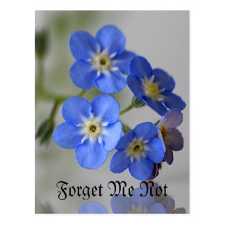 Forget Me Not Post Cards