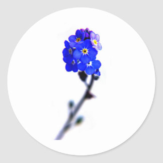 forget me not round sticker