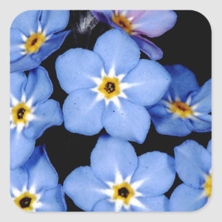 Forget-me-not Square Sticker