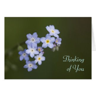 Forget-Me-Not, Thinking of You Card