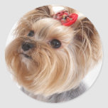Forget Me Not Yorkie gifts Classic Round Sticker