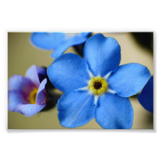 Forget-Me-Nots 11 Photo Print