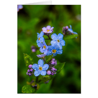 Forget-me-nots in the Rain Card