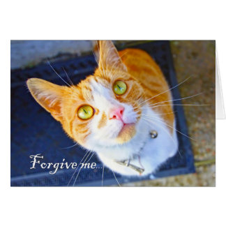 Forgive me, a lovely, cute cat with green eyes greeting card
