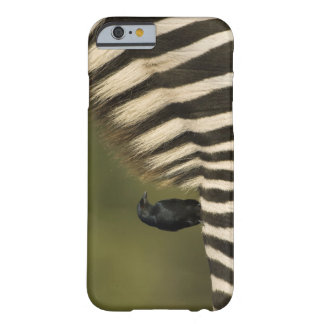 Fork-Tailed Drongo (Dicrurus adsimilis) riding Barely There iPhone 6 Case