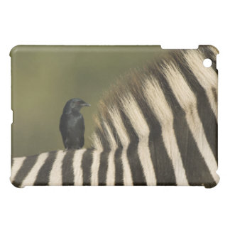 Fork-Tailed Drongo (Dicrurus adsimilis) riding Cover For The iPad Mini
