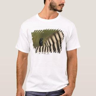 Fork-Tailed Drongo (Dicrurus adsimilis) riding T-Shirt
