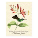 Fork Tailed Wood Nymph Hummingbird Art Postcard