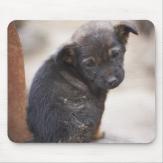 Forlorn puppy mouse pad