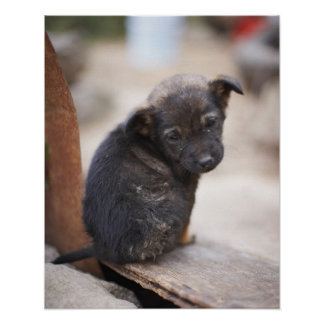 Forlorn puppy poster