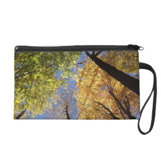 Forrest of Tall Trees Wristlet Purse