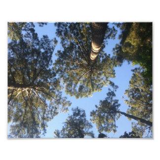 Forrest through the trees Print Art Photo