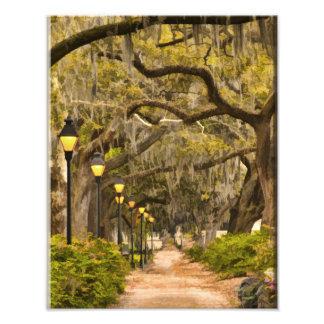Forsyth Park - Photo, Savannah, Georgia (GA) USA Photo Print