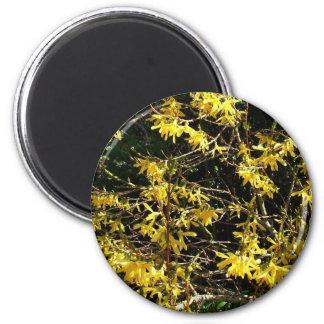 Forsythia Flowers Fridge Magnets