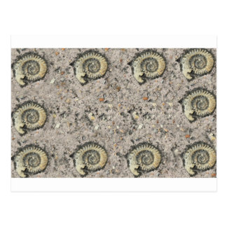 fossil background post cards
