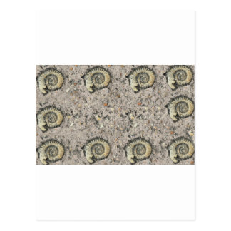 fossil background postcards