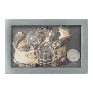 Fossil crab from the Eocene London Clay Rectangular Belt Buckles
